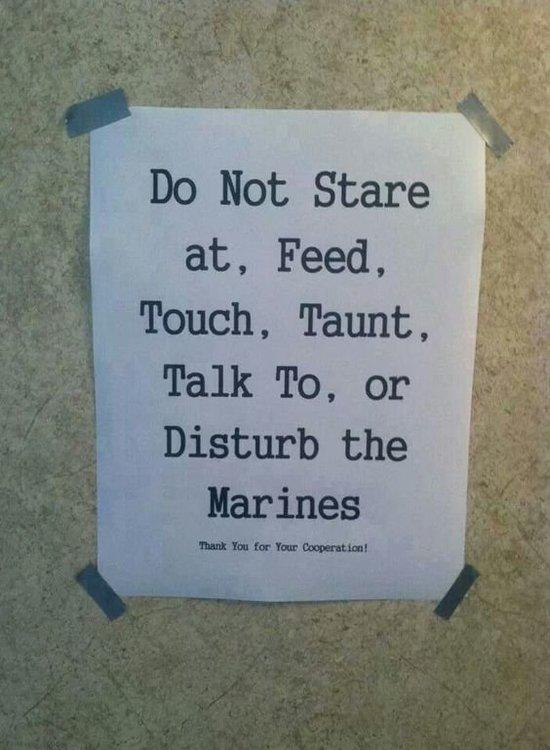 Do Not Disturb Marines.jpg